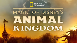 Magic of Disney's Animal Kingdom thumbnail