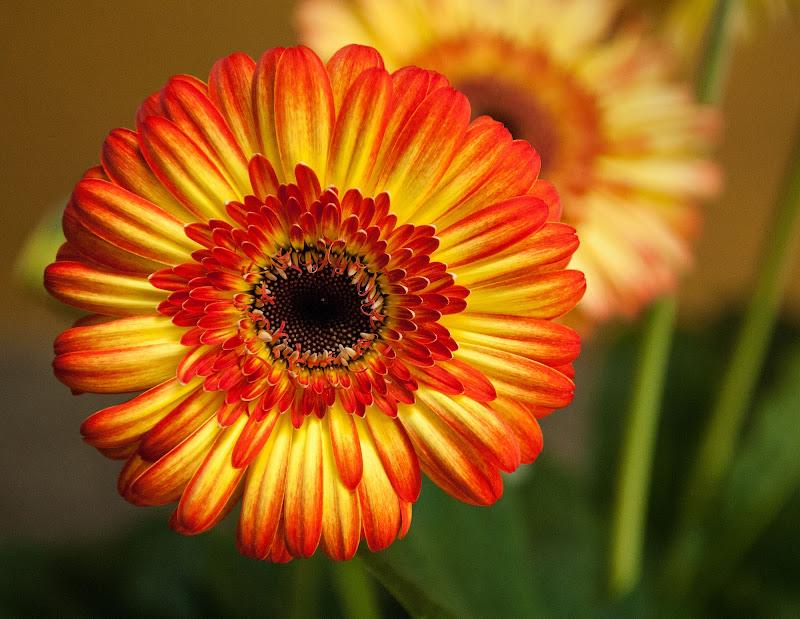 colori di primavera di Zerosedici