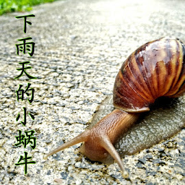 Snail after the rain by Chin KK - Typography Captioned Photos ( moving, wet, snail, rain, daylight )