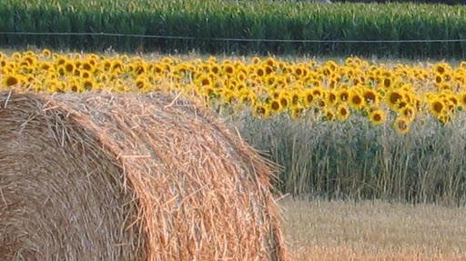 El campo alrededor de Puyravault