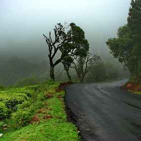 Drive through to Ooty by John Anthony - Landscapes Travel ( ooty )