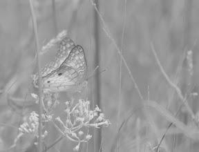 Photo: A Delicate Beauty