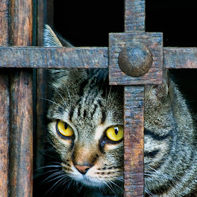 Let ME OUT ! by Gabriel Catalin - Animals - Cats Portraits