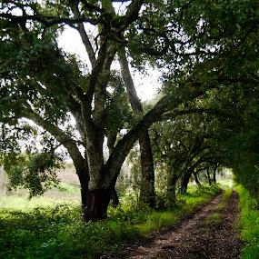 Os caminhos da Natureza  by Zulmira Relvas - Nature Up Close Trees & Bushes (  )