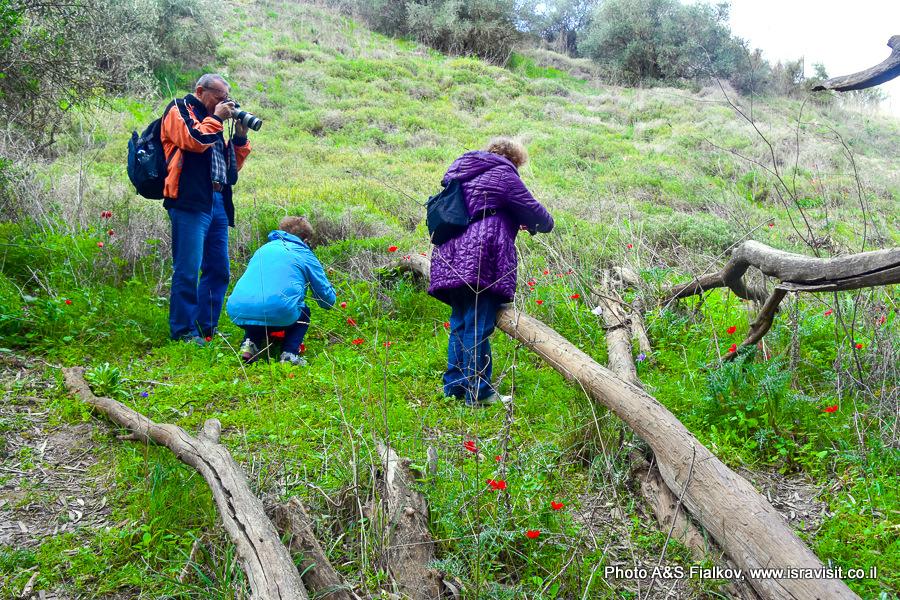 Экскурсия в верхней Галилее. Цветы в Израиле.