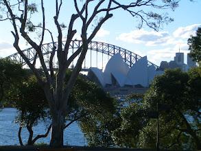 Photo: Blick von den Botanical Gardens auf Opernhaus und Harbour Bridge