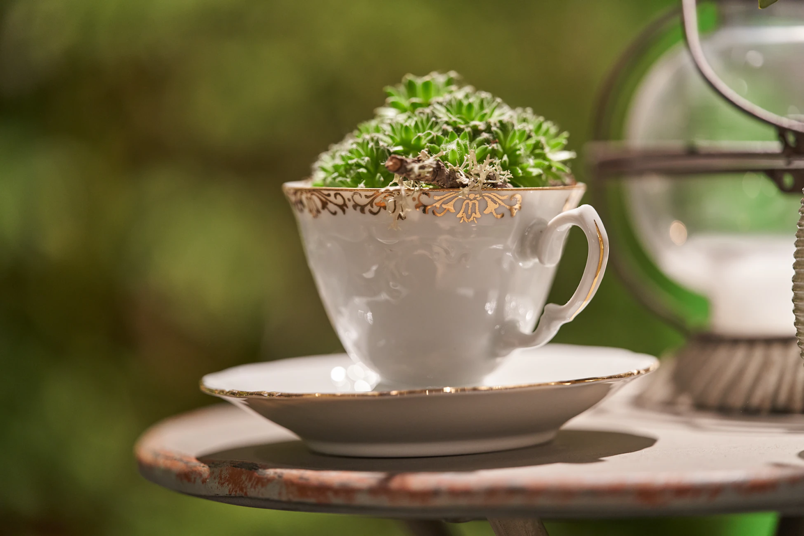 Succulent in a tea cup outside