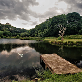 Mill Pond by BethSheba Ashe - Landscapes Waterscapes ( water, reflection, england, lake, jetty, pond, evening, dusk, dove )