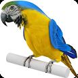 Real Talking Parrot apk