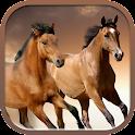 Horses slideshow & Wallpapers icon