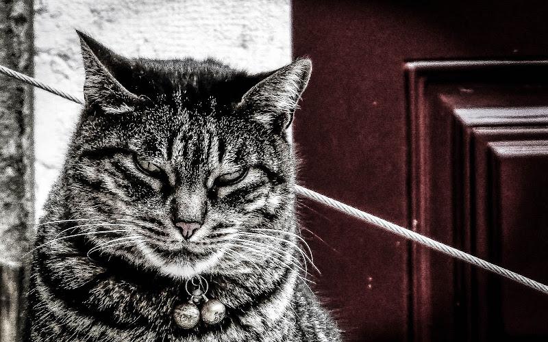 Non dire gatto se... di ChiarArts