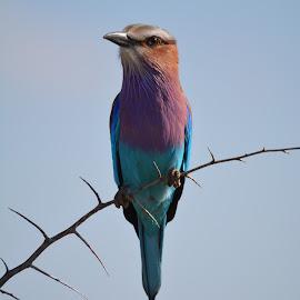 by Rinel Marsh - Animals Birds