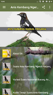 Kicau Anis Kembang Ngerol Panjang - náhled