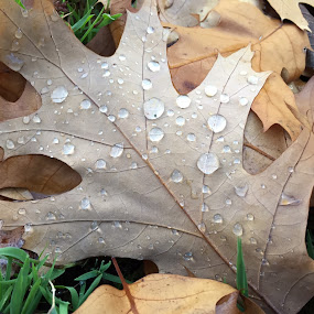 After the rain by Helga Be - Nature Up Close Leaves & Grasses ( autumn )