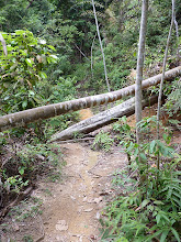 Photo: George Town, Penang - hiking to Penang hill, trail with fallen trees