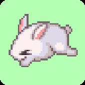 Catch de Bunny