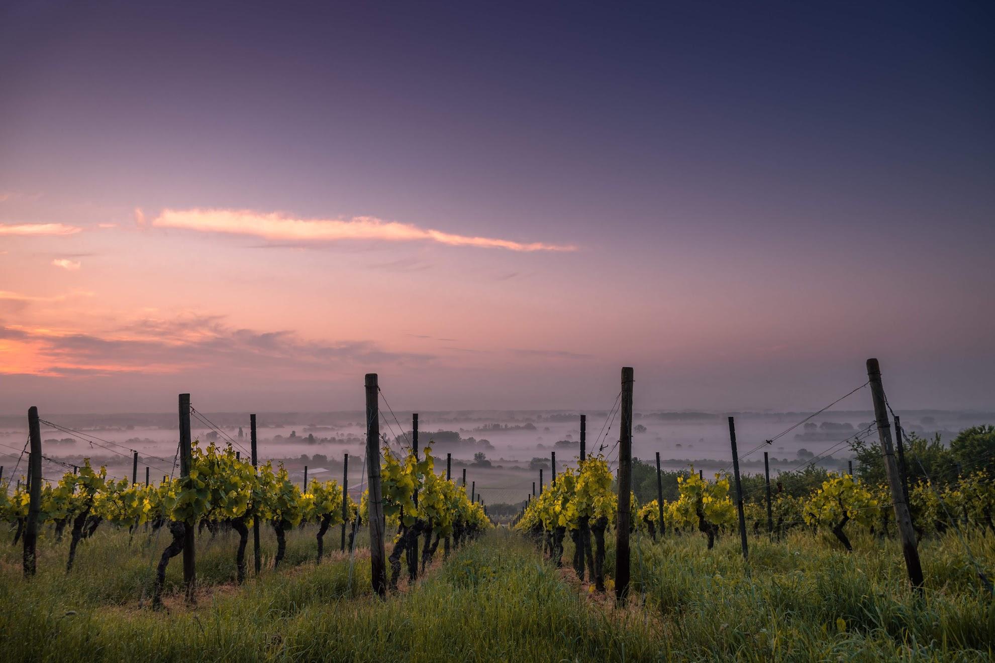 wijngaarden-toscane