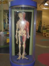 Photo: yep - that's a skeleton