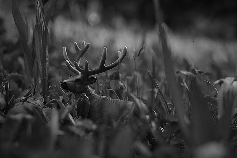 Un cervo in giardino! di utente cancellato