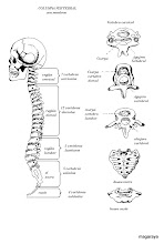 Photo: cuerpo humano columna vertebral