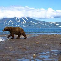 Il passaggio dell'orso di