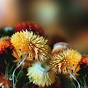 Autumn Flowers Live Wallpaper icon