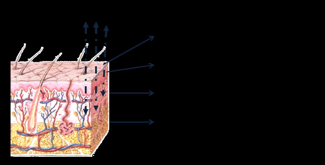 El aceite de comino al tratamiento de la psoriasis