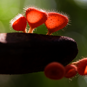 FUNGI by Basuki Mangkusudharma - Nature Up Close Mushrooms & Fungi ( fungi, fungus )