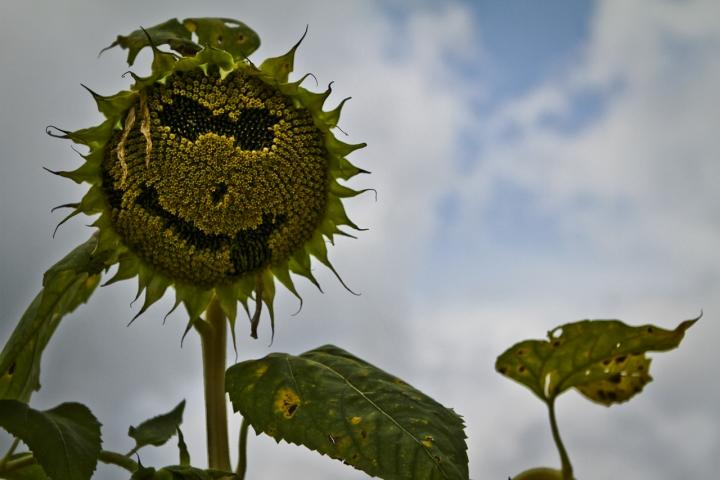 Sorriso floreale di Bellaventu