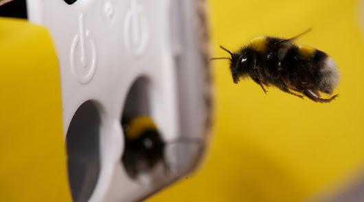 Trianum® y Vidi Terrum® mejoran la formación de la flor y la calidad del polen