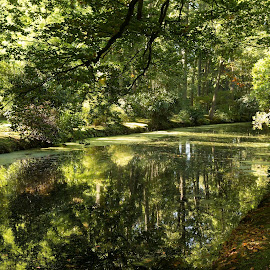 Haagse Bos, Den Haag, Netherlands by Serguei Ouklonski - City,  Street & Park  City Parks ( forest, woodland, scenic, scenery, sun, fall, season, land, perspective, wood, canal, day, park, no person, fair weather, reflection, nature, tranquil scene, tree, beauty in nature, leaf, clean, lush, water, environment, outdoors, plant, waterfront, green color, growth, tranquility, autumn, scenics - nature, no people, non-urban scene, landscape, nature landscape )