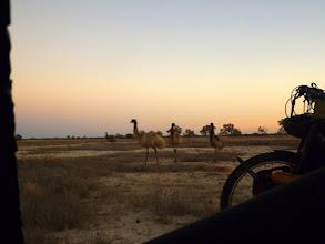 Photo: Blick aus dem Zelt: wilde Tiere