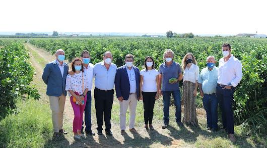 Andalucía producirá más de 2,4 millones de toneladas de cítricos esta campaña