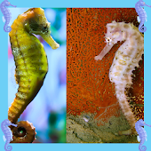 Seahorse Photo Collage