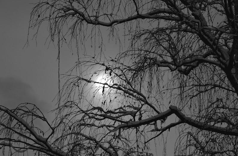 Atmosfere d'inverno di Julia982