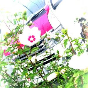 ハイエースバン TRH200Vのカスタム事例画像 シュナ 🐾🐶🐾CT2期生さんの2020年07月22日02:27の投稿