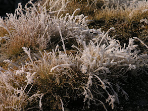 Photo: Morning frost