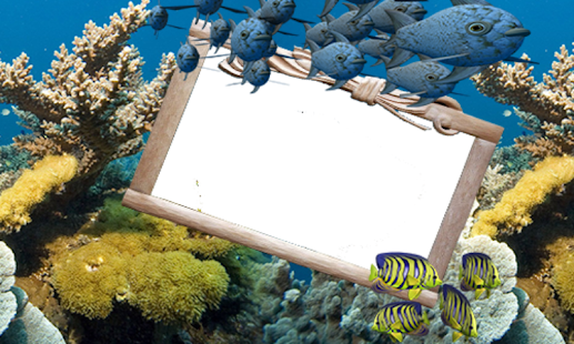Ocean Fishes Frames - Apps on Google Play