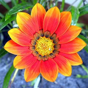 by Ganesh Shahi - Nature Up Close Flowers - 2011-2013