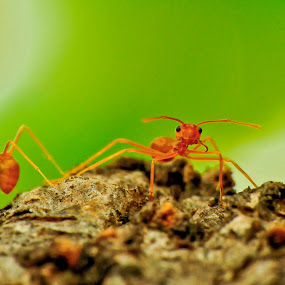 loser  vs winner by Aris Setiarso - Animals Insects & Spiders