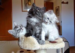 Photo: Shiva, Salem y Sían