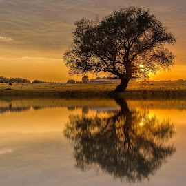 Reflections by Ovidiu Petrița - Landscapes Sunsets & Sunrises