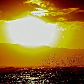 Sun Splash by Vanessa Latrimurti - Landscapes Sunsets & Sunrises ( splash, waves, north shore, drama, hawaii )