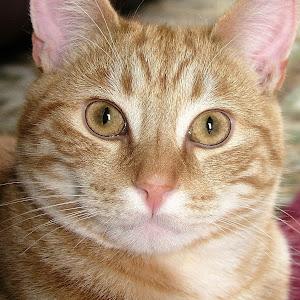 2007-12-23cats051.jpg