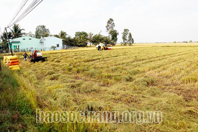 mô hình sạ lúa, phun thuốc, rải phân bằng máy bay nông nghiệp