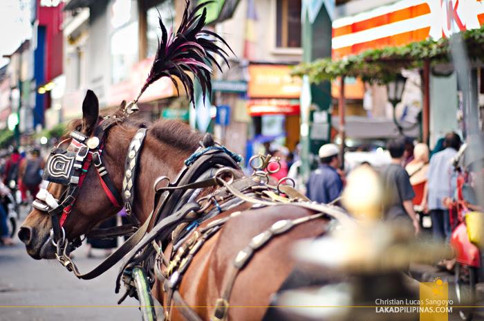 Malioboro Yogyakarta Horse Drawn Carriage