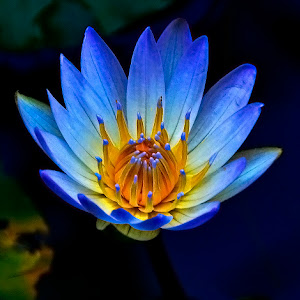 shravanthi flowers 018_01_filtered[1].jpg