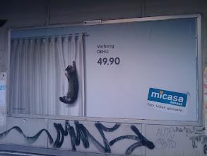 Photo: Katzencontent erreicht die Schweizer Werbewelt