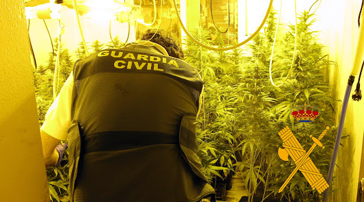 Cuatro detenidos en Vícar con más de 700 plantas de marihuana, armas y munición