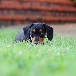 puppy grass 2.JPG